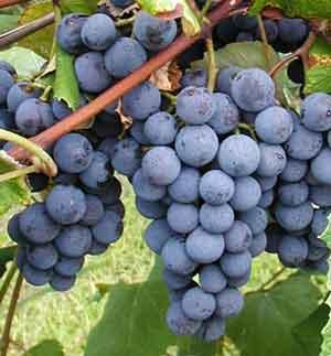 Cours d'anglais pour viticulteurs à Narbonne